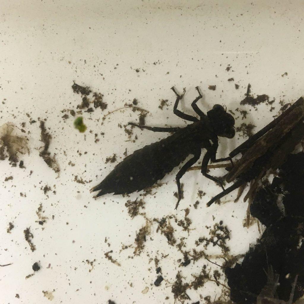 battle-creek-entomology-2