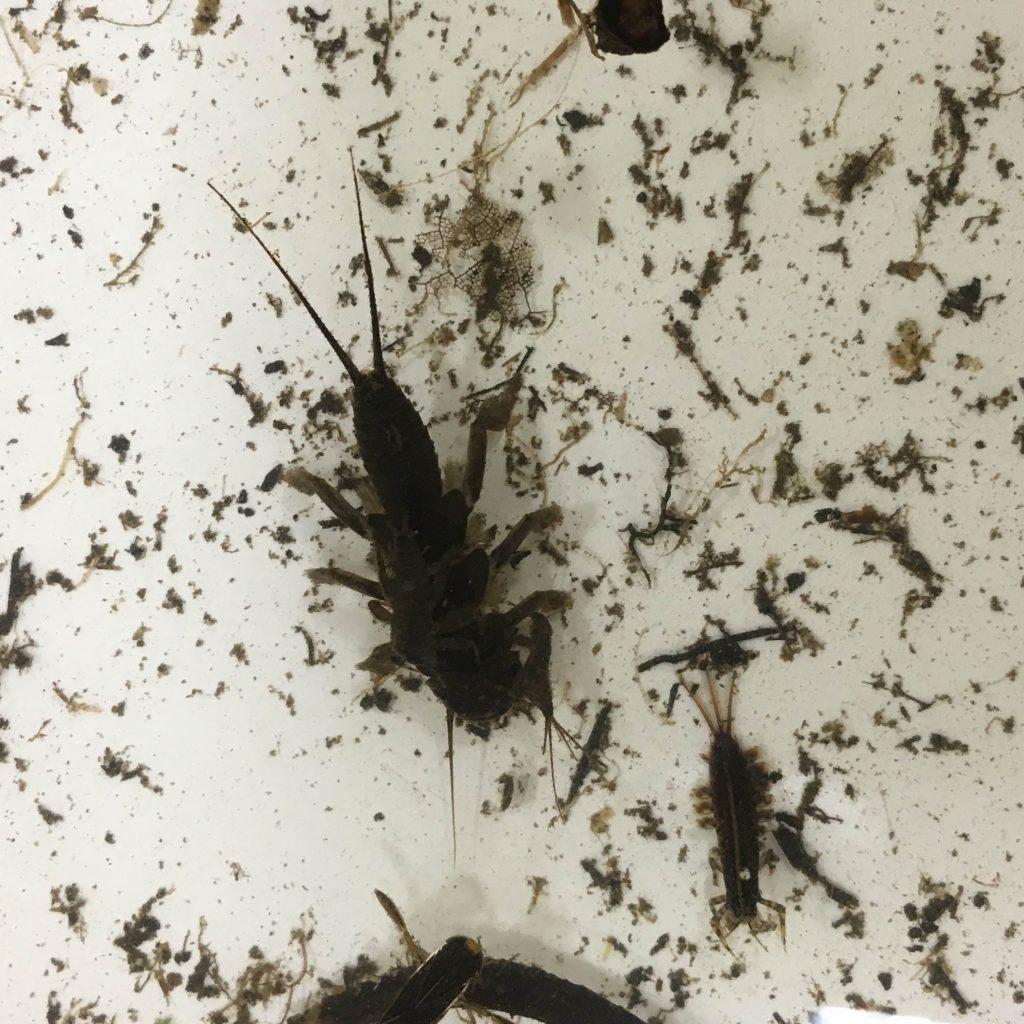 battle-creek-entomology-3