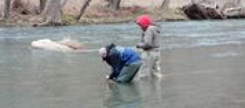 Roanoke/New River Valleys Program ventures to to West Virginia's Knapps Creek