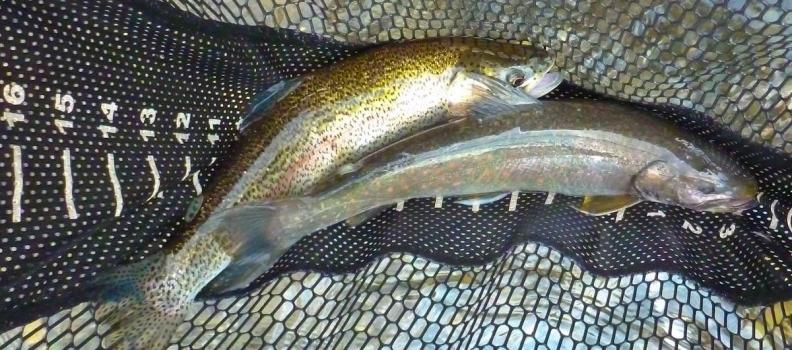 Incredible Fall Fishing on the Kenai River